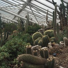 Apprentice 2015_week2_cacti picture